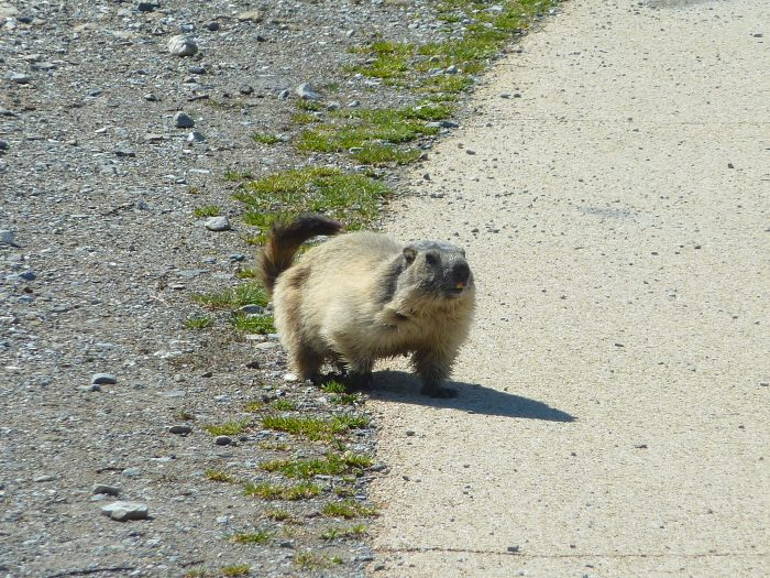 Petit animal local attendant le touriste