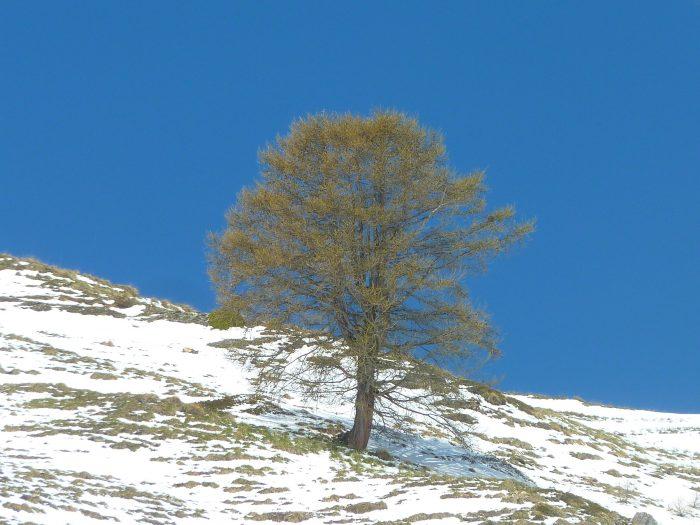 Malgré la neige, la nature commence à fleurir