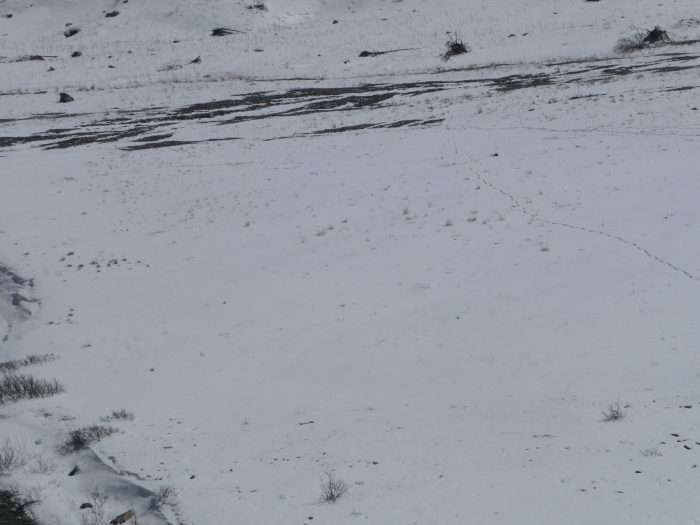 Et voila, on a atteint la neige