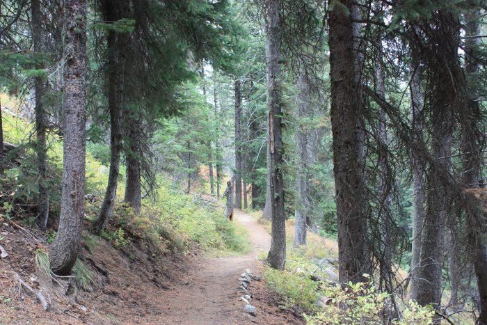 Randonnée à Grand Teton