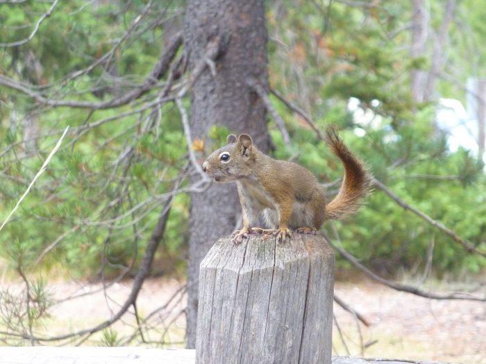Le jour, à part les oiseaux ... les écureuils