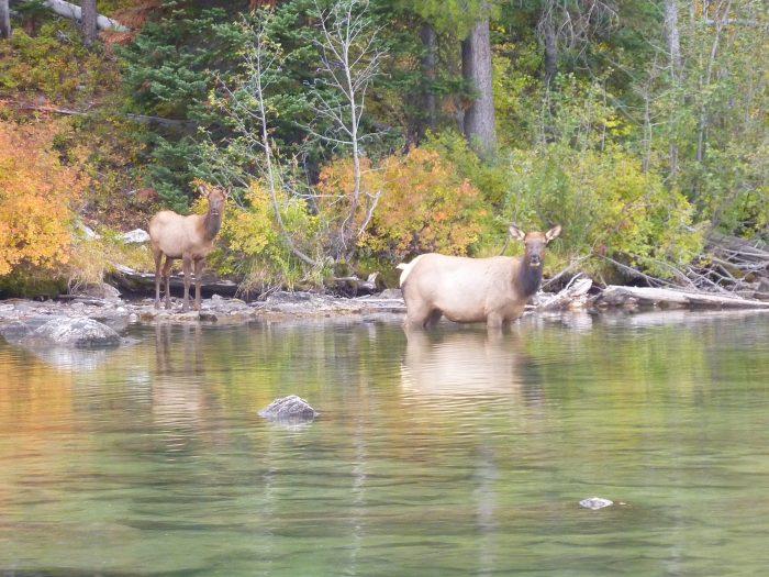 Grand Teton wild life