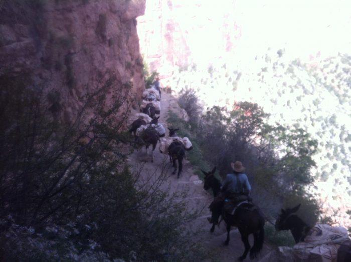 Priorité aux mules