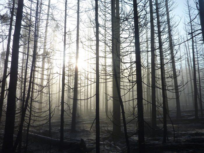 Sur le route de Yellowstone, les incendies ont eu raison des forêts
