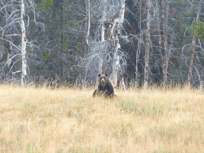 ... et ours du soir